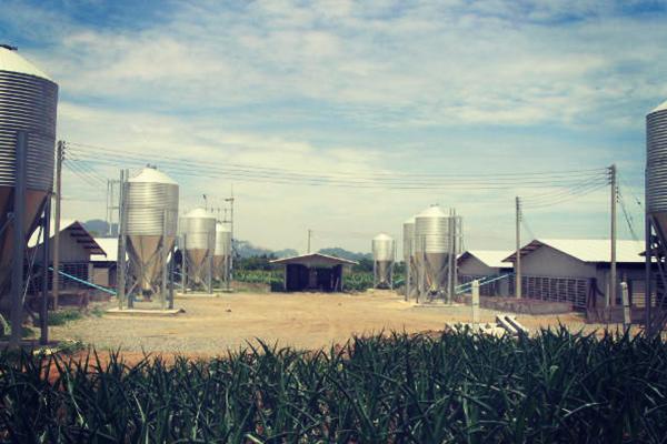 Silo granja Tailandia